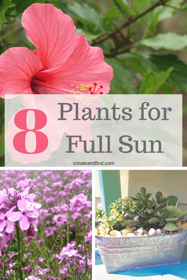 Full Sun Container Plants that love the sun #gardening #sunlovingplants #flowers