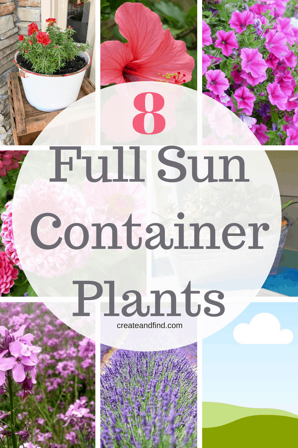 Full Sun Container Plants - beautiful plants that will tolerate full sun areas #createandfind #gardening #plants #flowers #sunlovingplants