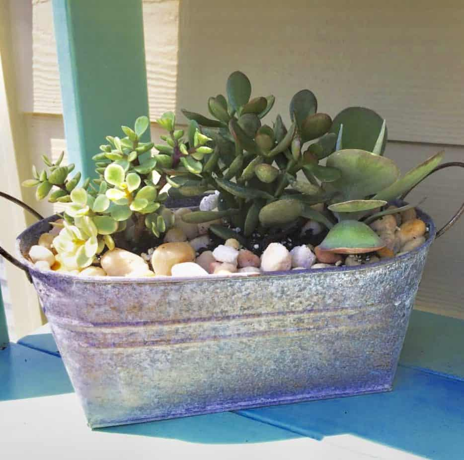 container plants for full sun succulents
