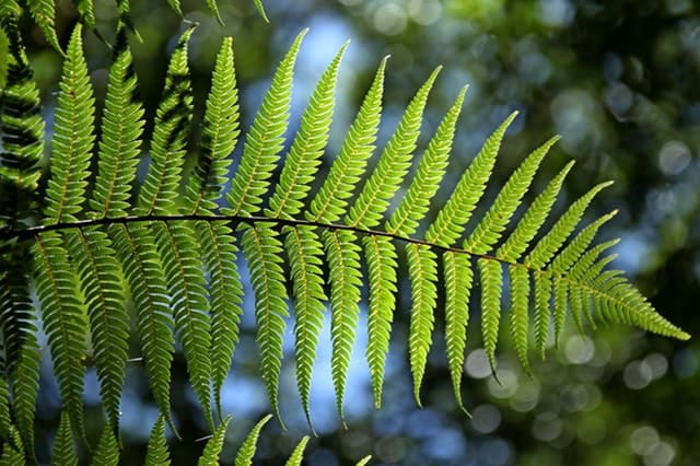 ferns - plants that grow in shade
