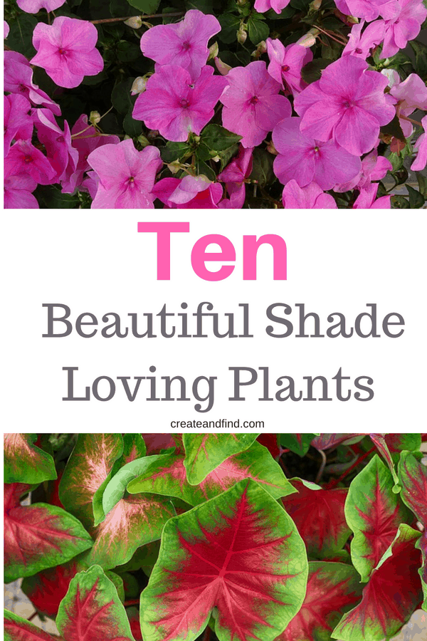 10 beautiful plants that grow in shade - add these shade loving garden ideas for gorgeous color! #createandfind #shadeplants #plantsthatloveshade #gardening #flowers