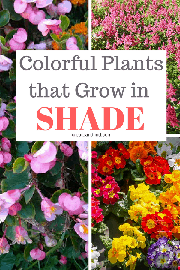 10 colorful plants that grow in shade. You'll love adding these gorgeous plants to your garden's shady spots. #createandfind #shadeplants #plantsthatloveshade #shadegardens #whattoplantinshade #gardening