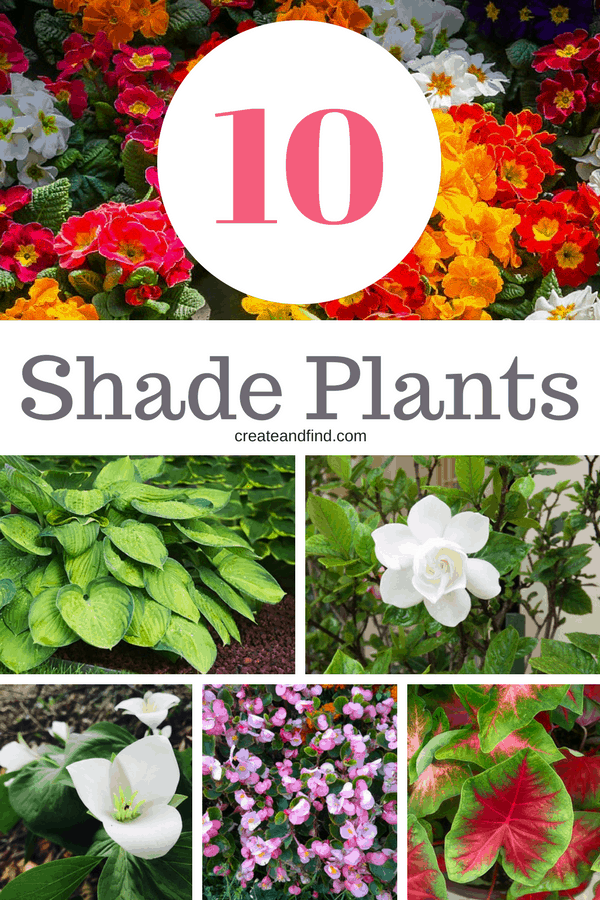 10 plants to add to your garden that love shade #createandfind #gardening #flowers #plantsforshade #shadeplants #shadelovingplants