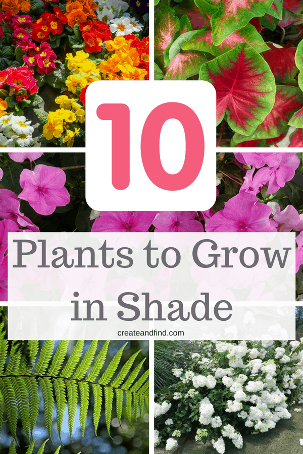 What to plant for those shady areas of your yard - here are 10 gorgeous plants that love the shade! #createandfind #shadegarden #plantsthatloveshade #shadeplants #gardening