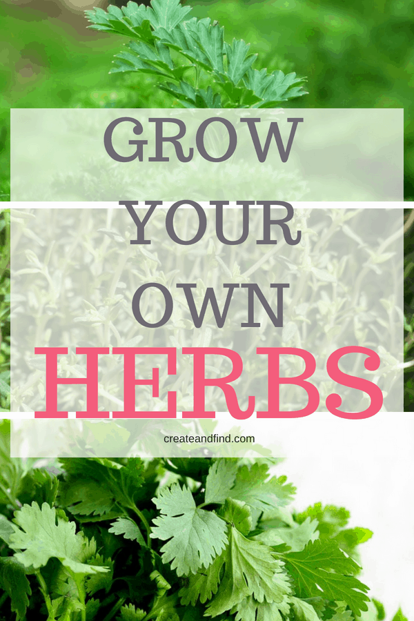 Growing Herbs - What you need to know to start your own herb garden.
