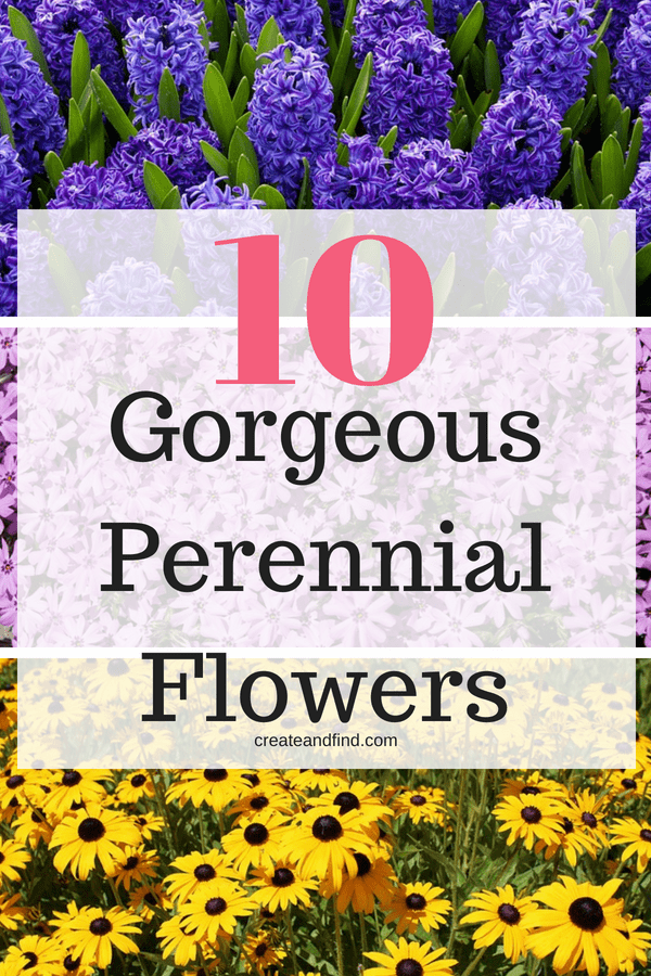10 Amazing Perennial Flowers to add to the garden or yard this year. Blooms year after year with these amazing plants.