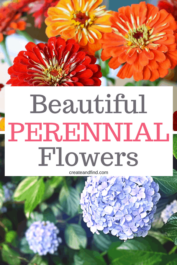 Beautiful Perennial Flowers to bring color to the garden or yard year after year