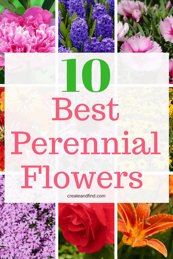10 Gorgeous Perennial Flowers to give you color year after year