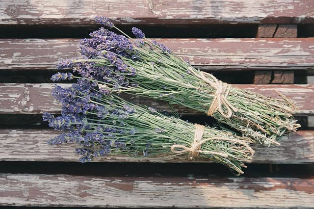 Growing Herbs - Lavender