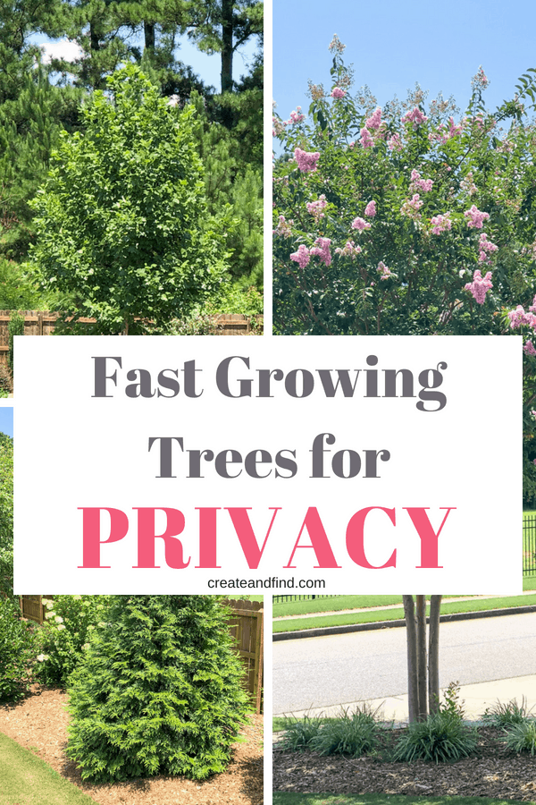 Fast Growing Trees for Privacy - Plant these now for shade and privacy later!