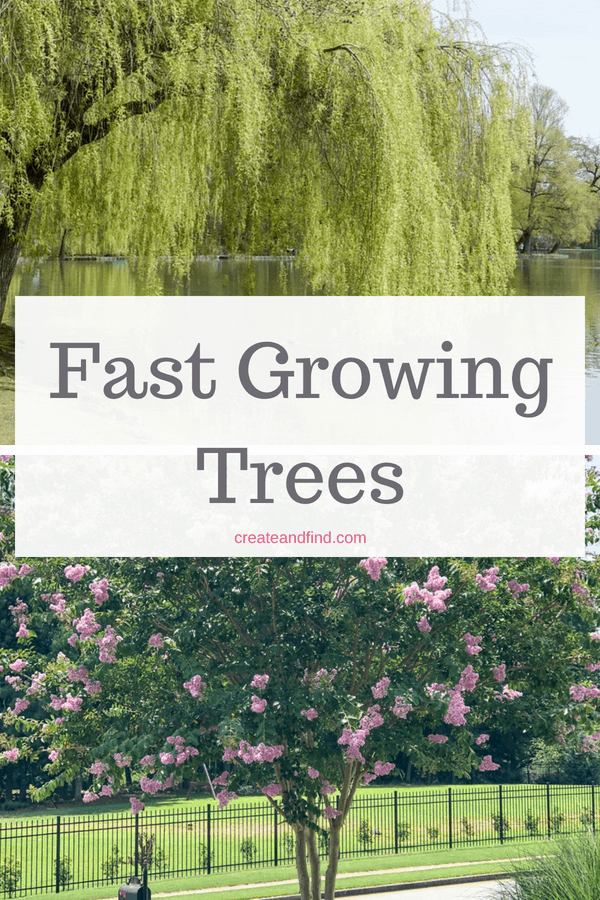 Fast Growing Trees for Privacy and Shade
